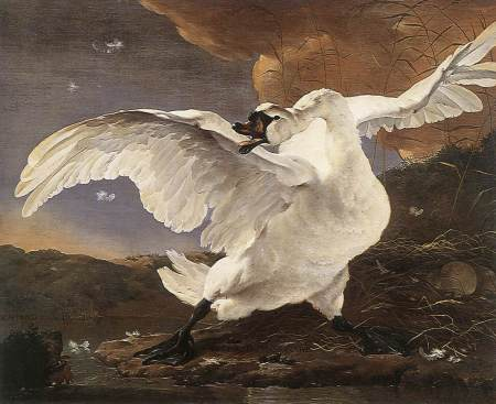 "Jan Asselijn - ""The Threatened Swan"""
